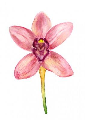 Obraz Akwarela różowa orchidea