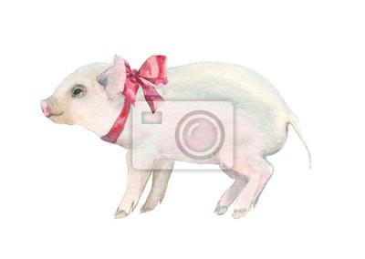 akwarela różowa świnka z czerwonym dziobem