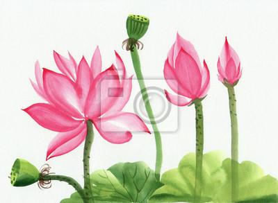 Akwarela różowy kwiat lotosu