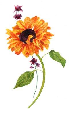 Obraz Akwarela rysunek złoty słonecznik z zielonymi liśćmi na białym backround