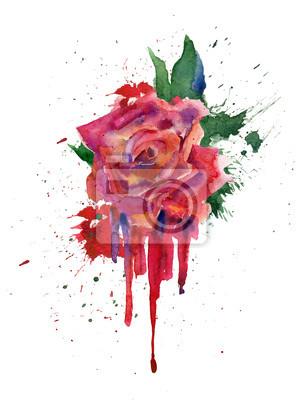 Akwarela. Szkic z czerwoną różą.