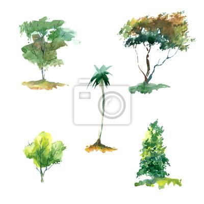 Akwarela Zestaw drzew na białym tle