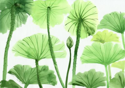 Akwarela zielonych liści lotosu