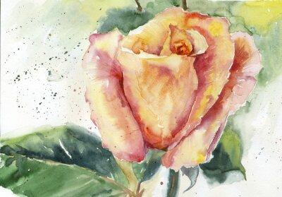 Akwarela żółto-różowa róża