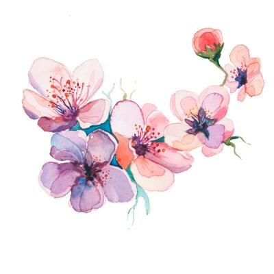 Obraz akwarele wiosennych kwiatów samodzielnie na białym tle