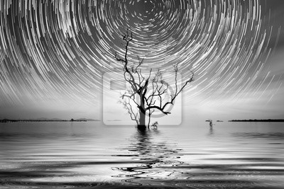 Obraz Alone drzewa i gwiazda Fotografia szlak do Twojego wnętrza.