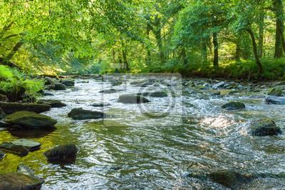 Obraz Along the river Barle in Tarr Steps Woodland
