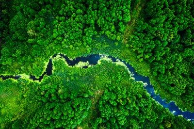 Obraz Amazing blooming algae on green river, aerial view