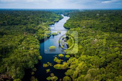 Obraz Amazon Rainforest in Anavilhanas National Park, Amazonas - Brazil