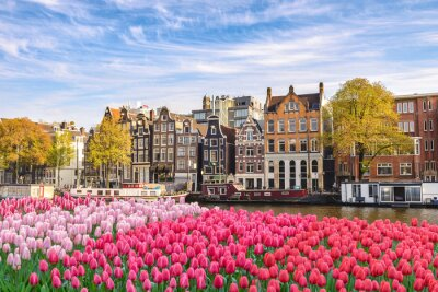 Obraz Amsterdam Netherlands, city skyline Dutch house at canal waterfront with spring tulip flower