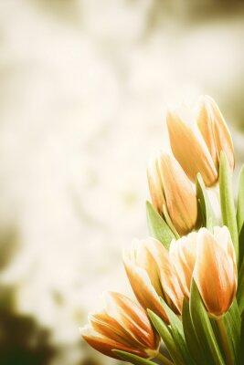 Obraz Archiwalne pocztówka z tulipan