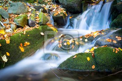 autumn brook among green stones