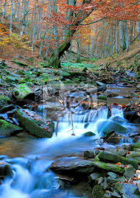 autumn brook in forest