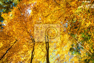 Autumn in the forest. Nature landscape with red, orange, yellow trees and leaves