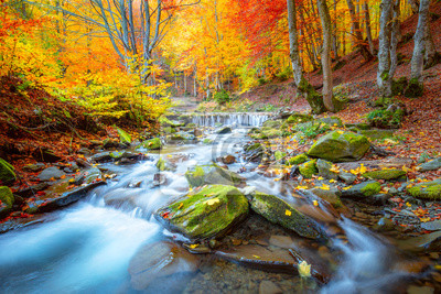 Obraz Autumn landscape -  river waterfall in colorful autumn forest park with yellow red  leaves