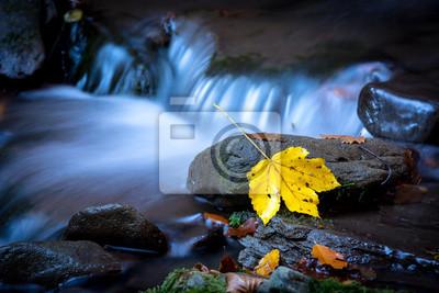 Autumn leaf on wet stone