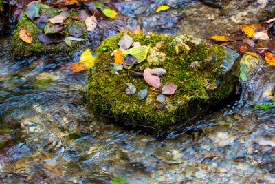 autumn leafage on green stone in water