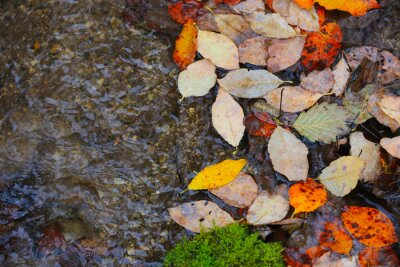 Autumn leafage on water surface