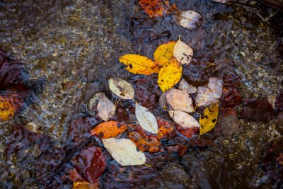 autumn leafage on water surface in puddle