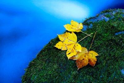 Autumn maple leafs on green stone