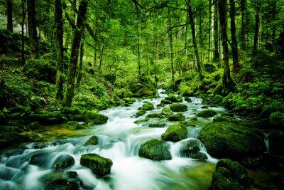 Obraz Bach im Wald