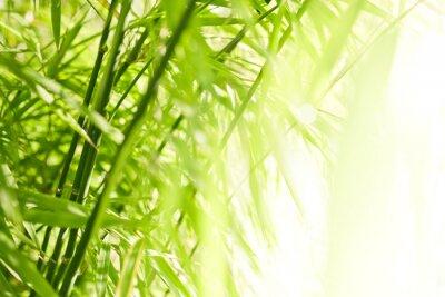 Obraz Bambus zielone tło