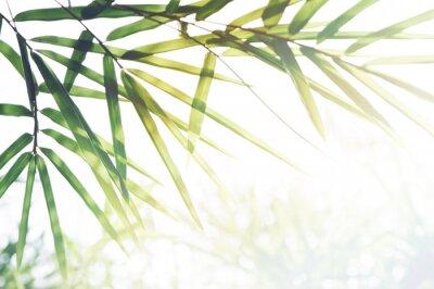 Obraz Bambusy Las lub bambusowe liście, światło słoneczne i miejsce na tekst