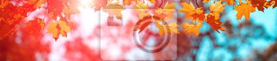 Obraz Banner autumn background