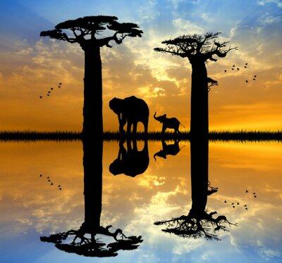 Obraz Baobab i słoń na zachodzie słońca