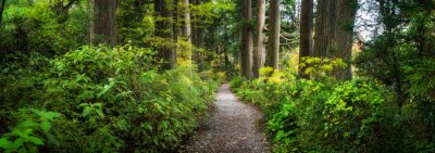 Obraz Beautiful forest path as panorama background