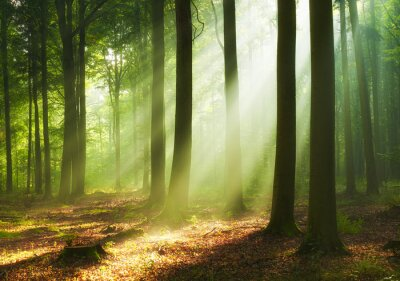 Obraz Beautiful morning in the forest