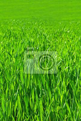 Obraz bezszwowe tileable zielone łąki trawy