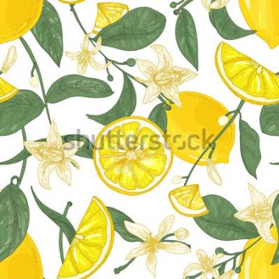 Obraz Bezszwowy wzór z świeżymi soczystymi cytrynami, cały i pokrojony w kawałki, kwiaty i liście na białym tle. Tło z owocami cytrusowymi. Botaniczna wektorowa ilustracja w antyka stylu dla tapety.