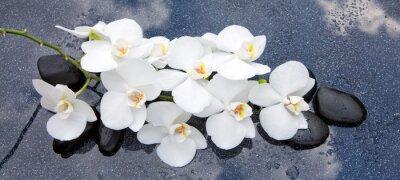Obraz Biała orchidea i czarne kamienie bliska.