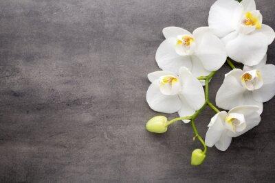 Obraz Biała orchidea na szarym tle.