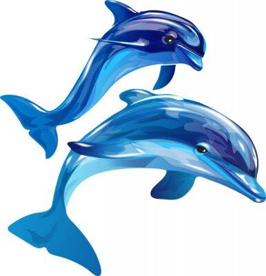 Obraz białe delfiny