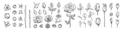 Obraz Big set of line roses and leaves. Rose bud illustration. Hand drawn flowers. Vector floral elements clipart. Perfect for decorations wedding cards, greeting cards, invitations.