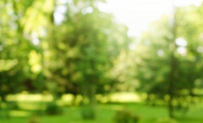 Obraz Blur defocused park garden tree in nature background