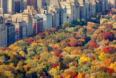 Obraz Brilliant kolory spadek liści w Central Parku późnym popołudniem. Widok z lotu ptaka w stronę Central Park West. Upper West Side na Manhattanie, Nowy Jork