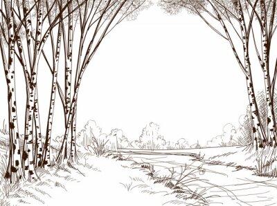 Obraz Brzoza drzewa lasu, tło graficzne
