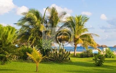 Bujna roślinność wzdłuż niebieski Morze Karaibskie.