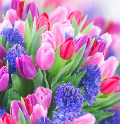 Obraz Bukiet niebieski hiacynt i tulipany