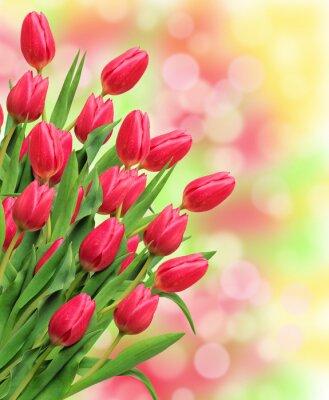 Obraz Bukiet różowe tulipany na jasnym tle przyrody