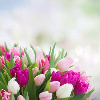 Obraz bukiet różowych, fioletowych i białych tulipanów