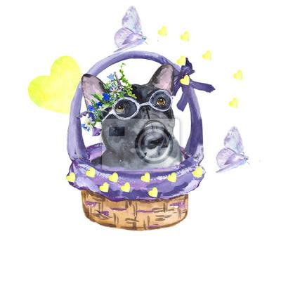 Obraz Buldog francuski. Pies rasy buldog francuski w koszu. Miłość, wiosna, motyle. akwarela. Może być stosowany dla pocztówek, druków i wzorów