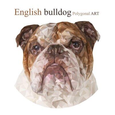 Obraz Bulldog Angielski. Łamana rysunek ..
