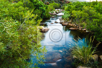 Obraz Calm Oasis, Small Babbling Brook In The Cederberg Wilderness, South Africa. A Stream or Clear Water and Green Foliage