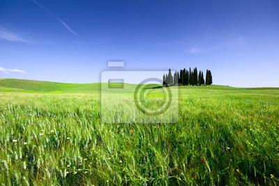 Campo di grano con Cipressi, toscana