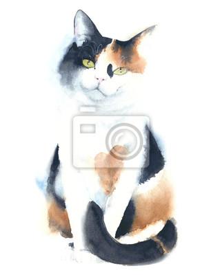 Cat Calico Portret akwarela ilustracji samodzielnie na białym tle