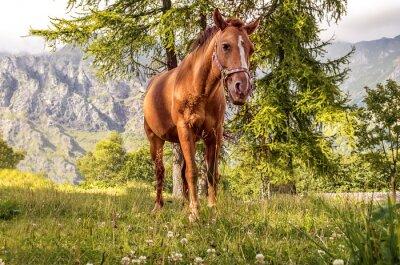Obraz Cavallo pascolo
